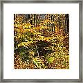 The Maine Woods Framed Print