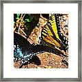 The Meeting Of The Butterflies Framed Print