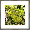 The Miniature World Of The Moss Framed Print
