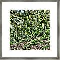 The Mossy Creatures Of The  Old Beech Forest 5 Framed Print