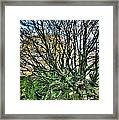 The Mossy Creatures Of The  Old Beech Forest 8 Framed Print