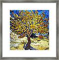 The Mulberry Tree Framed Print