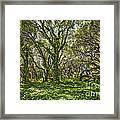 The Mysterious Forest - The Magical Trees Of The Los Osos Oak Reserve. Framed Print