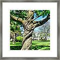 The Old Lady Of The Green Framed Print by Michelle Calkins