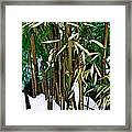The Patience Of Bamboo Framed Print