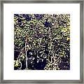 The Pear Tree Framed Print