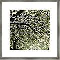 The Perfumed Cherry Tree 1 Framed Print