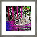 The Psychedelic Cat Framed Print