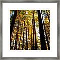 The Redwoods Of Florence Keller Park Framed Print