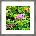 The Season Of Ripening - Featured 3 Framed Print