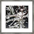 The Snowy Tree II Framed Print