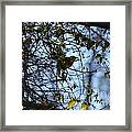 The Song Of Winter Framed Print