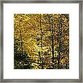 The Splendor Of Yellow   Framed Print