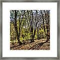 The Spring Forest Framed Print