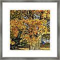 The Swinging Tree Framed Print