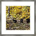 The Three Bears Framed Print