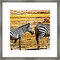 The Tired Zebras Framed Print