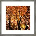 The Trees Dance As The Sun Smiles Framed Print