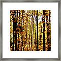 The Trees Through The Forest Framed Print