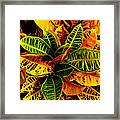The Tropical Croton Framed Print by Lisa Cortez