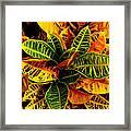 The Tropical Croton Framed Print