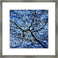 The Veins Of Time Framed Print