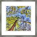 The Wild Forest Framed Print