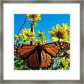 The Wonderful Monarch 3 Framed Print
