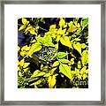 The Yellow Plant Framed Print