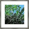 The Young Eaglet Peaks Out  Framed Print