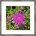 Thistle In Saint Mary's Ecological Reserve-newfoundland Framed Print