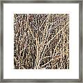 Thorny Wall Framed Print