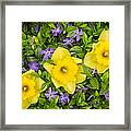 Three Daffodils In Blooming Periwinkle Framed Print
