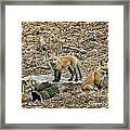 Three Kits Framed Print