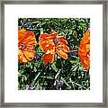 Three Poppies Framed Print by Claudette Bujold-Poirier