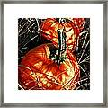Three Pumpkins Framed Print