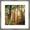 Through The Island Forest Framed Print