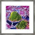 Thyroid Gland, Sem Framed Print