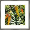 Tiger Buds Framed Print