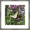 Tiger Butterfly Framed Print