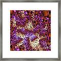 Tiger Lily Abstract Mixed Media Painting Framed Print