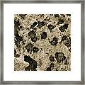 Time Holes - Sepia Tone - Wonderwood Collection - Olympic Peninsula Wa Framed Print