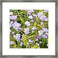 Tinkerbell Framed Print