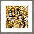 Tombs Under Oaktree Framed Print