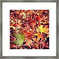Too Soon? Framed Print by CML Brown