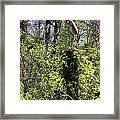 Top Of The Glades Framed Print
