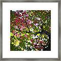 Touches Of Autumn  Framed Print