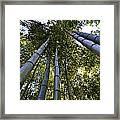 Towering Bamboo Framed Print
