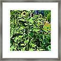 Towering Sunflowers Framed Print