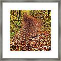 Trail In Fall Forest Framed Print
